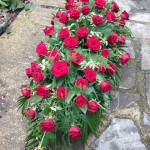 Red Rose Coffin Flower Spray